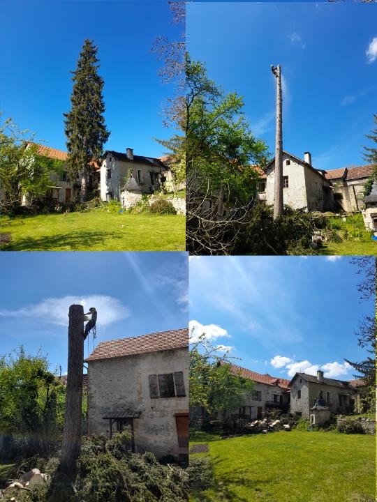 Abattage des arbres toutes tailles